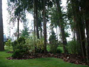 Оформление лесного участка в аренду